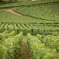 Future Wine by John Magyar Photography