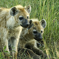 Fuzzy Baby Hyenas by Michele Burgess