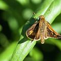 Fuzzy Moth by Alida Thorpe