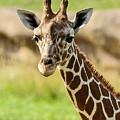G Is For Giraffe by John Haldane