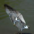Gabriel The Gull by Donna Blackhall