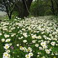 Gaia Blooming by Andonis Katanos