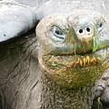 Galapagos Giant Tortoise by Megan Thompson