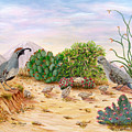 Gambel Quails Day In The Life by Judy Filarecki