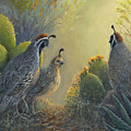Gambel's Quail - Early Light by June Hunt