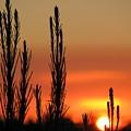 Gambier Sunset by Robert Jenner