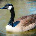 Gander At A Goose by Lisa Kilby