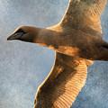 Gannet In Flight 2 by WB Johnston