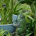 Garden 30 by Joyce StJames
