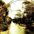 Garden Arches Of Gold by Douglas Barnard