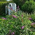 Old Garden Beach Flowers by Harriet Harding