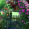 Garden Bench And Trellis by Nancy Mueller