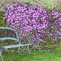 Garden Bench by Robert Nelson