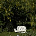 Garden Bench White by Sara Stevenson