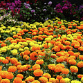 Garden by Bert Mailer