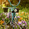 Garden Bicycle by Rachel Morrison