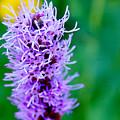 Garden Blooms by Adnan Ilyas
