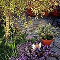 Garden Fairy by Martine Murphy