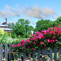Garden Fence And Roses by Nancy Mueller