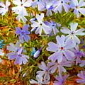 Flower Photography- Floral Art- Digital-floral Fireworks by Kathy  Symonds