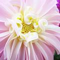 Garden Floral Art Pink Dahlia Flower Baslee Troutman by Baslee Troutman