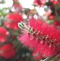 Garden Flower 6 by Remegio Onia