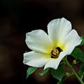 Garden Flower by Barbara King