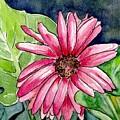 Garden Flower by Brenda Owen
