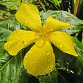 Garden Flower In Kwajalein by Dan Norton