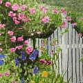 Garden Gate by Ally Benbrook