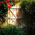 Garden Gate by Carol Groenen