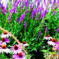 Garden Glory by Ed Weidman