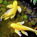 Garden Goldenfish by James Fannin