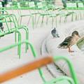 Garden In Paris by Luis Ganilho