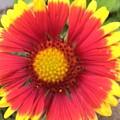Garden Jewel by Heather Riley