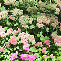 Garden by Joan Norris