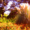 Garden Landscape by Amy Vangsgard