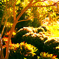 Garden Landscape On A Sunny Day by Amy Vangsgard