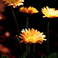 Garden Light by Eric Christopher Jackson
