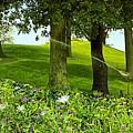 Garden by Madeline Ellis