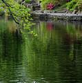Garden Memories by Steven Clark