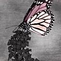 Garden Monarch Mystery by Leda Robertson