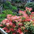 Garden Oasis by Will Borden