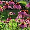 Garden Of Cones by Karol Livote