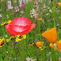 Garden Of Delight by John Loyd Rushing