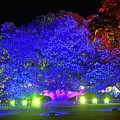 Garden Of Light By Kaye Menner by Kaye Menner