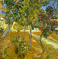 Garden Of Saint Paul's Hospital by Vincent van Gogh
