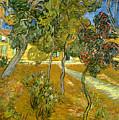 Garden Of Saint Paul's Hospital by Vincent van Gogh