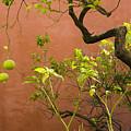 Garden Of The Alcazar by Jan Kapoor