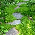 Garden Path by Idaho Scenic Images Linda Lantzy